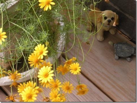 不知名的小花與狗、烏龜十分有趣