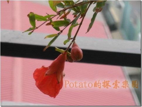 potato小花園