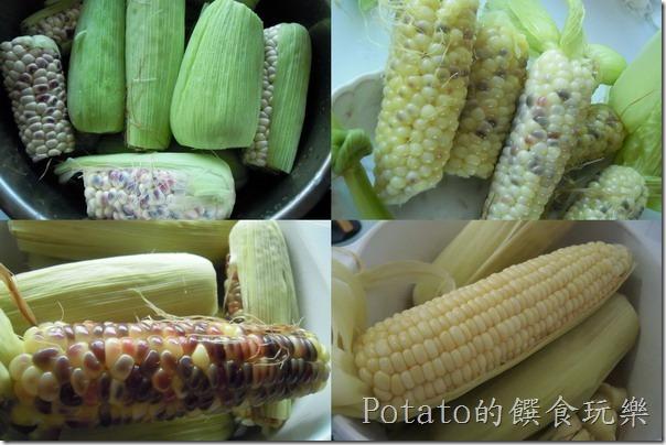 自己來煮好吃的玉米