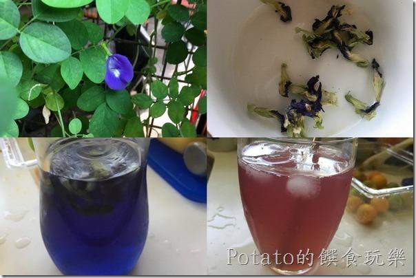 神奇的蝶豆花飲品