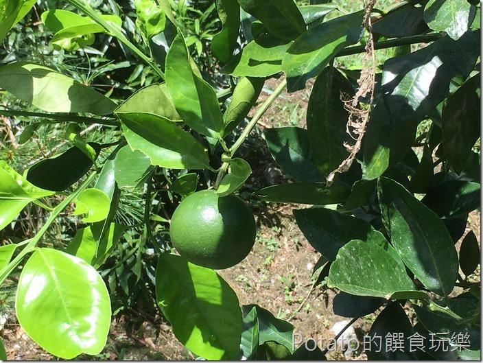 砂婆礑樂活園水果