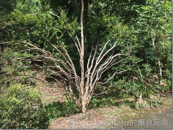 砂婆礑樂活園樹