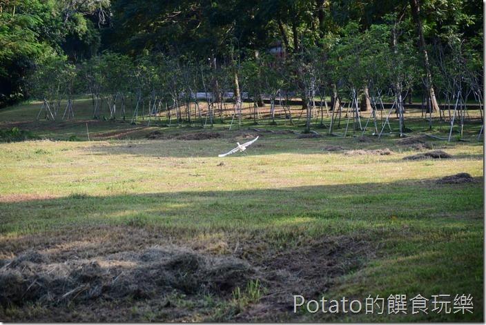 水道博物館淨水池區前草原